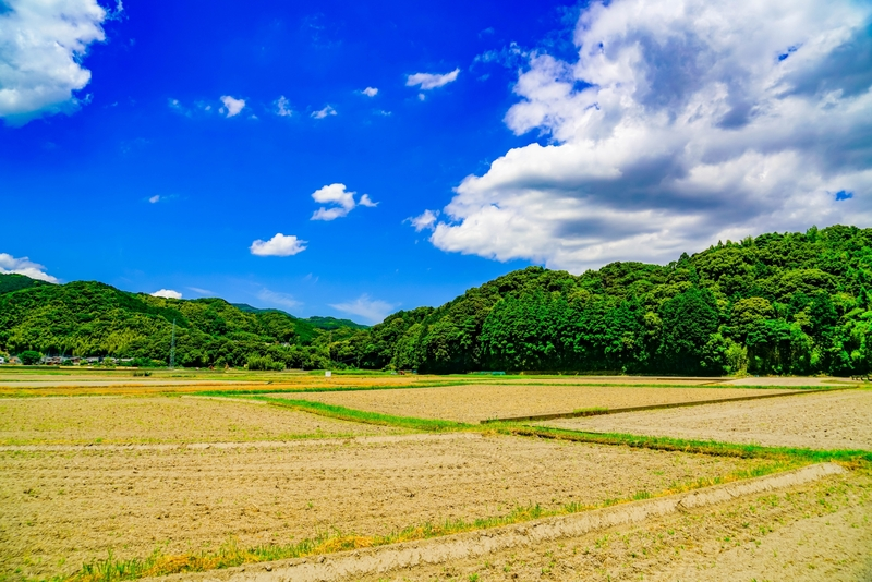 農地を売却する方法とは?かかる税金や費用、価格相場、注意点などを徹底解説!
