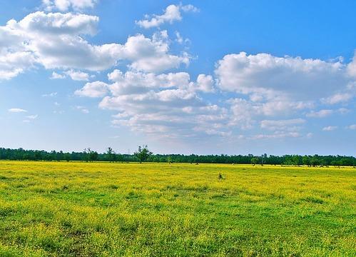 meadow-413897_640 (1)