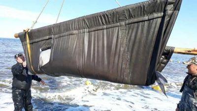Первые косатки и белухи отпущены на волю из «китовой тюрьмы»