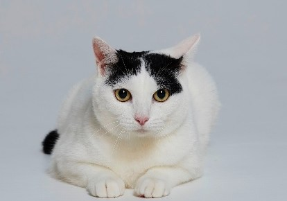 極主夫道の猫マシロの正面