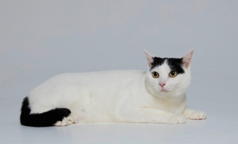 極主夫道の猫マシロの横顔