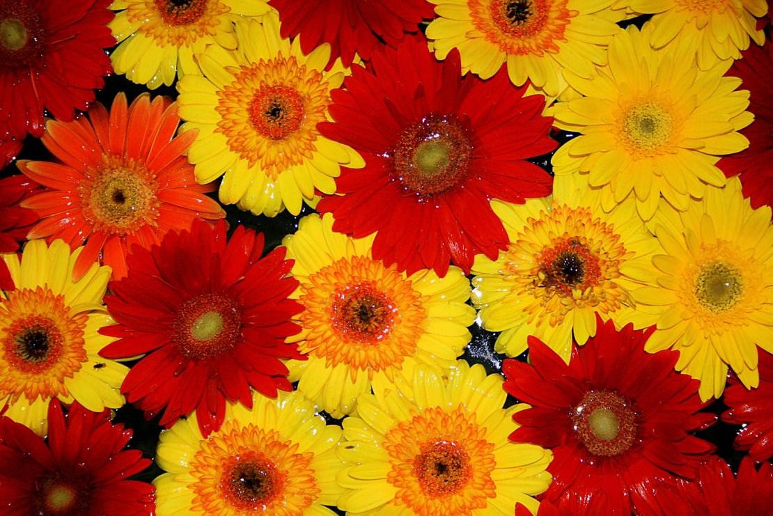 Fondos de pantalla de flores en FullHD