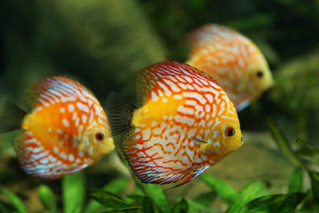 Fondos de pantalla de peces en FullHD