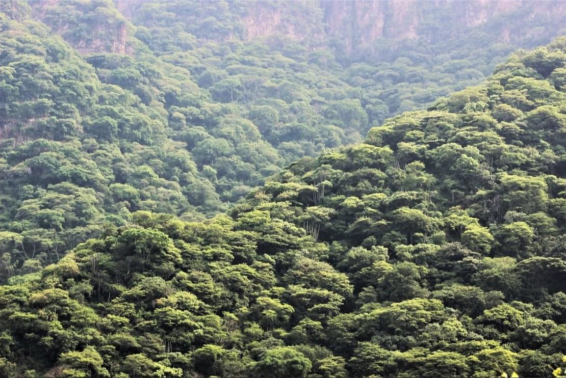 Fondos de pantalla de selva en FullHD