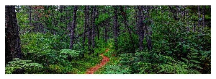 magical-pine-path-holly-cyr2