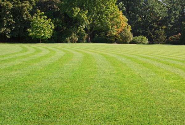 perfect lawns aren t
