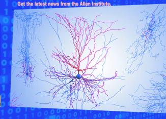Brain Mysterious