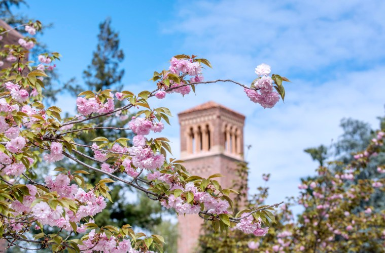 Trinity Hall's bell tower is visible through a cluster of spring blossoms.