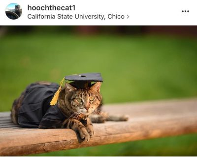 Instagram photo of a cat in a cap and gown costume