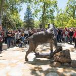 The wildcat statue from the back with the crowd looking on