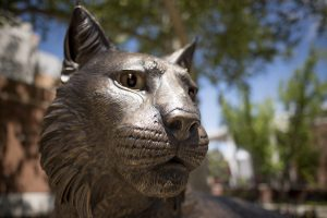 The 7-foot-long, 1,500-pound bronze statue, designed and created by artist Matthew Gray Palmer, is now proudly displayed in Wildcat Plaza in front of the Bell Memorial Union along West Second Street.