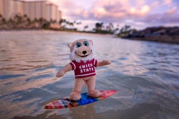Willie the Wildcat surfs in Hawaii.