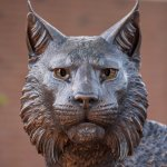 close-up of the wildcat face