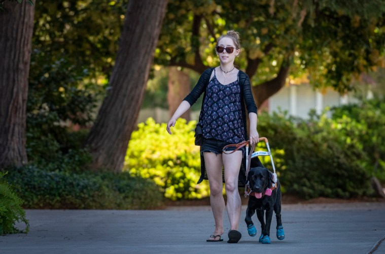 Olivia Merz walks on a campus path holding onto the handle of her Guide Dogs for the Blind companion, a black lab wearing blue booties.