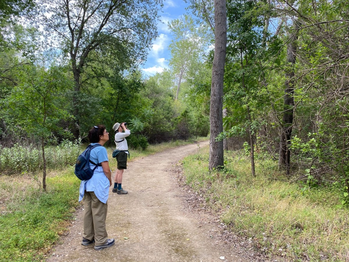Two individuals stare up into the trees while on a dirt path of a riparian area.