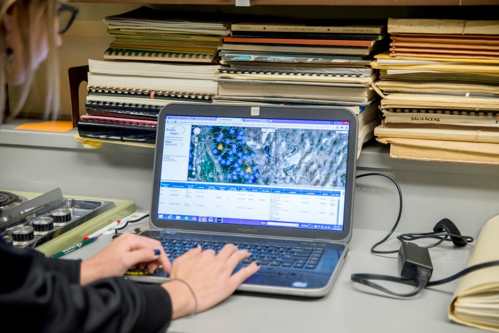 A student works on a computer in the herbarium.