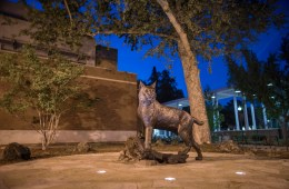 The Wildcat Statue stands proudly in Wildcat Plaza during spring evening.