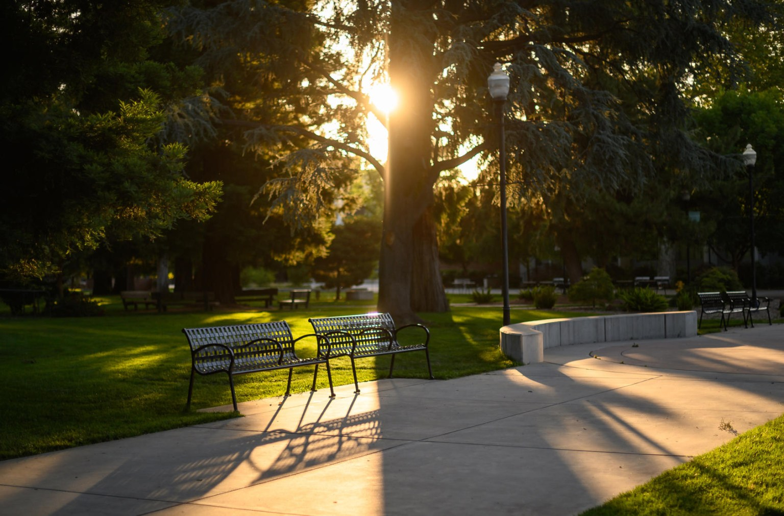 Morning sun lights a bench on Chico State campus