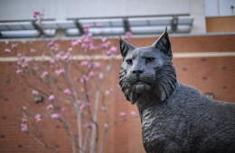 Spring blossoms bloom behind a statue of a wildcat on a college campus.