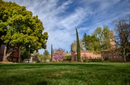 An empty lush green lawn in the foreground with trees and academic buildings in the background.