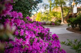 Spring blooms appear on a college campus