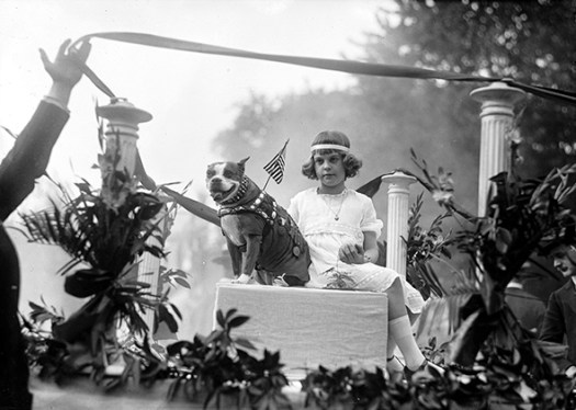 Sgt. Stubby appears in a parade in 1921. (Library of Congress)