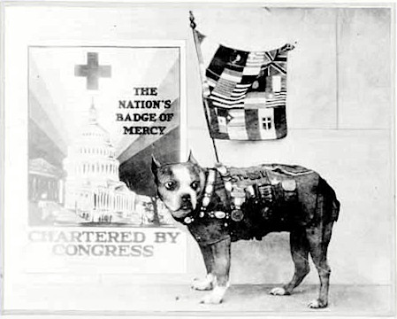 Sgt. Stubby appears on a poster soliciting new members for the American Red Cross. (Library of Congress)