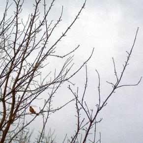robin-on-white2.jpg