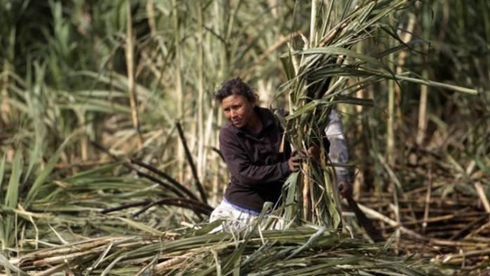reuters_nicaragua_sugarcane_31Dec12-590x332