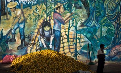 Monoculture is failing Nicaragua's farmers