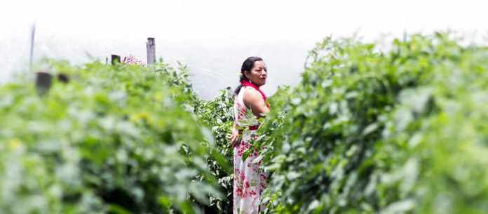 Recognition of the property rights of women in Central America: Mission accomplished?