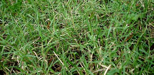 How to Control Bermuda Grass  Todays Homeowner