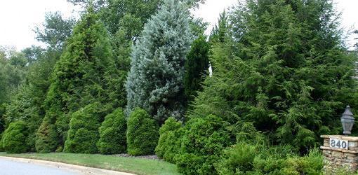 Trees and shrubs form windbreak in yard