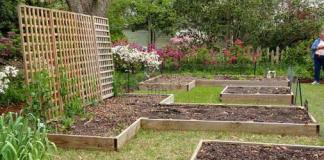 Raised beds made of wood