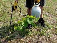 Applying Bt to plants using a pump up sprayer
