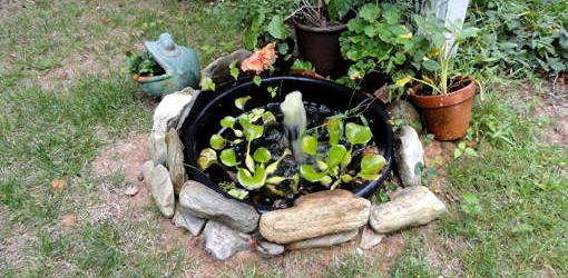 Water feature lined with rocks, dug into ground in backyard