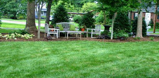 Fescue grass lawn