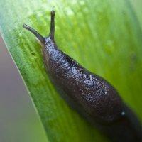 Slug on plant.