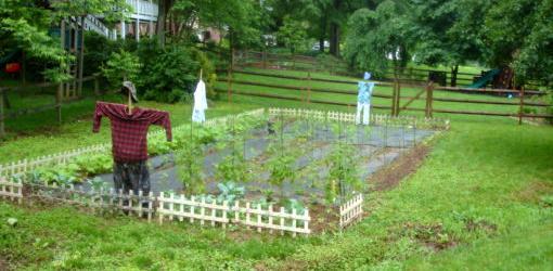 Vegetable garden plot with scarecrows.