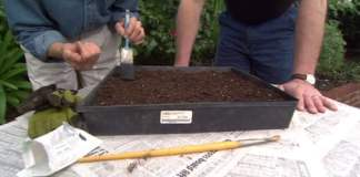 Using an old paintbrush to brush dirt over small seeds.