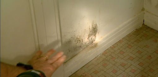 Mold and mildew growing in bathroom closet.