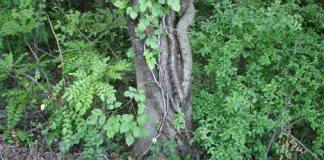 Overgrown yard full of prime tick habitat.