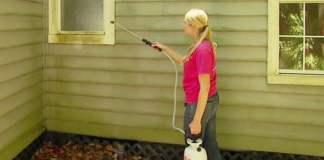 Spraying mold and mildew remover on the outside of a green house.