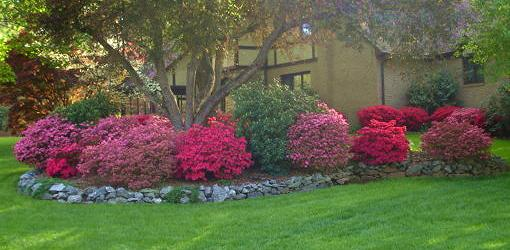 Shade Loving Flowers to Plant in Your Yard  Todays Homeowner