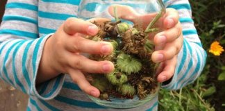 Child holding flower seed pods saved in jar.
