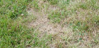 Brown spots on grass