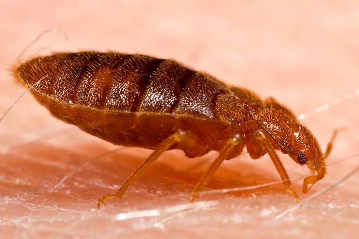Bed Bug Removal in Kennett Square, PA