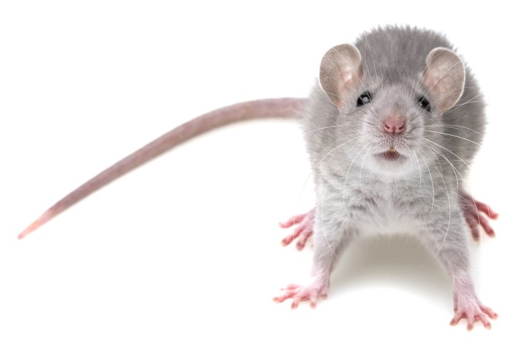 Pests & Rodent Control