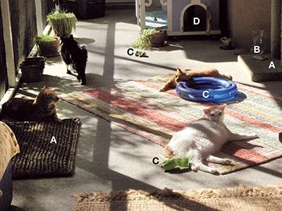 On Your Best BehaviorThe 10 Commandments of Cat Management  Todays Veterinary Practice