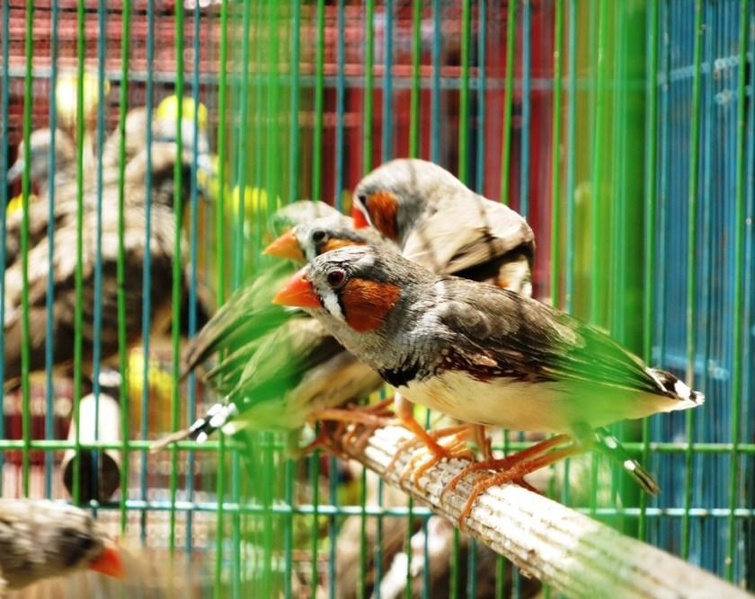 vogel 4